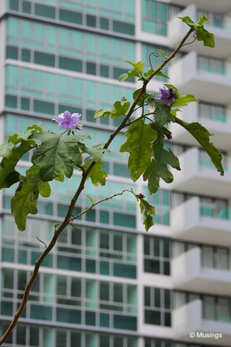 Condo tree saplings starting to bloom flowers.