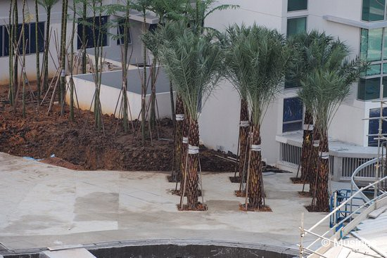 Newly planted tree saplings near the Contemporary Bridge.
