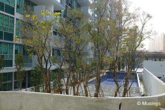 Trees have been planted just behind the heated pool; otherwise the HDB residents opposite will get uninhibited free shows.