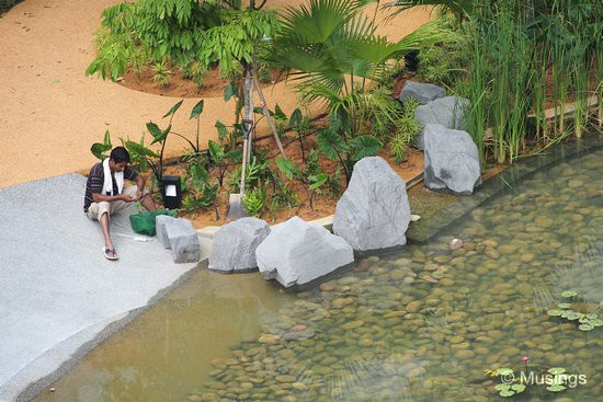 Boulders have been placed at several spots around the Tranquil World pond's circumference