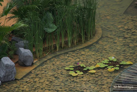 Closer look at the Lily pond.