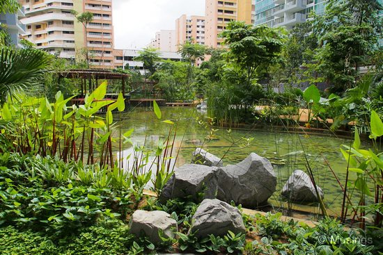 Amazonian Lily Pond at Tranquil World, where our block is. Ling laments though that the lilies are baby size - hopefully they'll grow over time.
