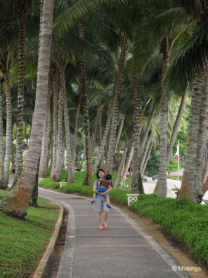 The tall coconut and palm trees made for very pleasant strolls.